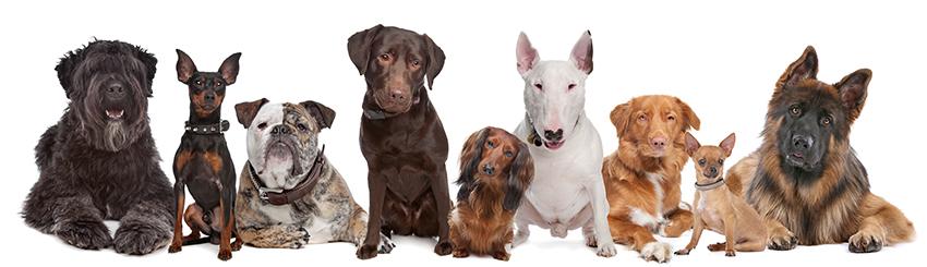 bigstock-group-of-dogs-24806696.jpg