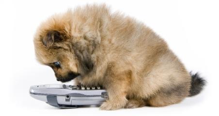 puppy-phone.jpg